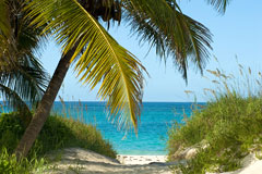 bahamas beach path